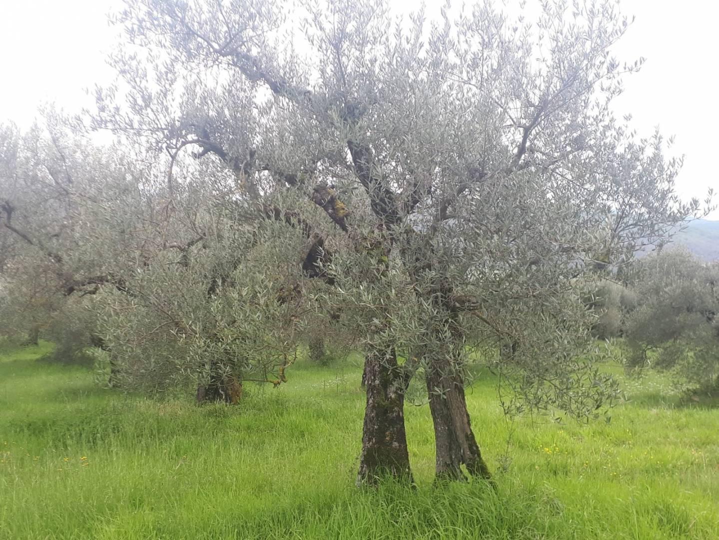 1 3 Perugia